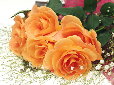 Colorful rose wallpaper - orange roses wallpapers
