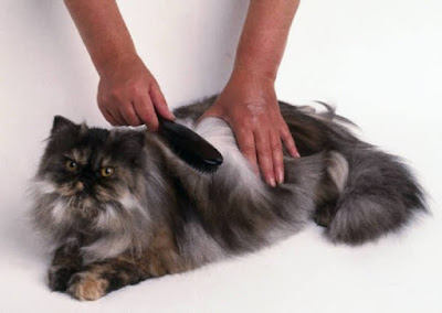 Cuida la piel de tus mascotas
