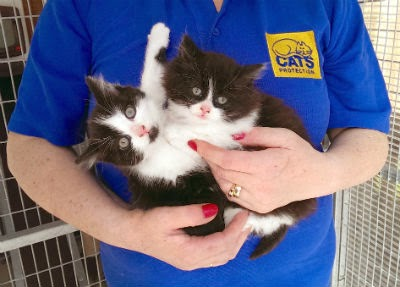 Wilbur and Wilfred, black-and-white kittens