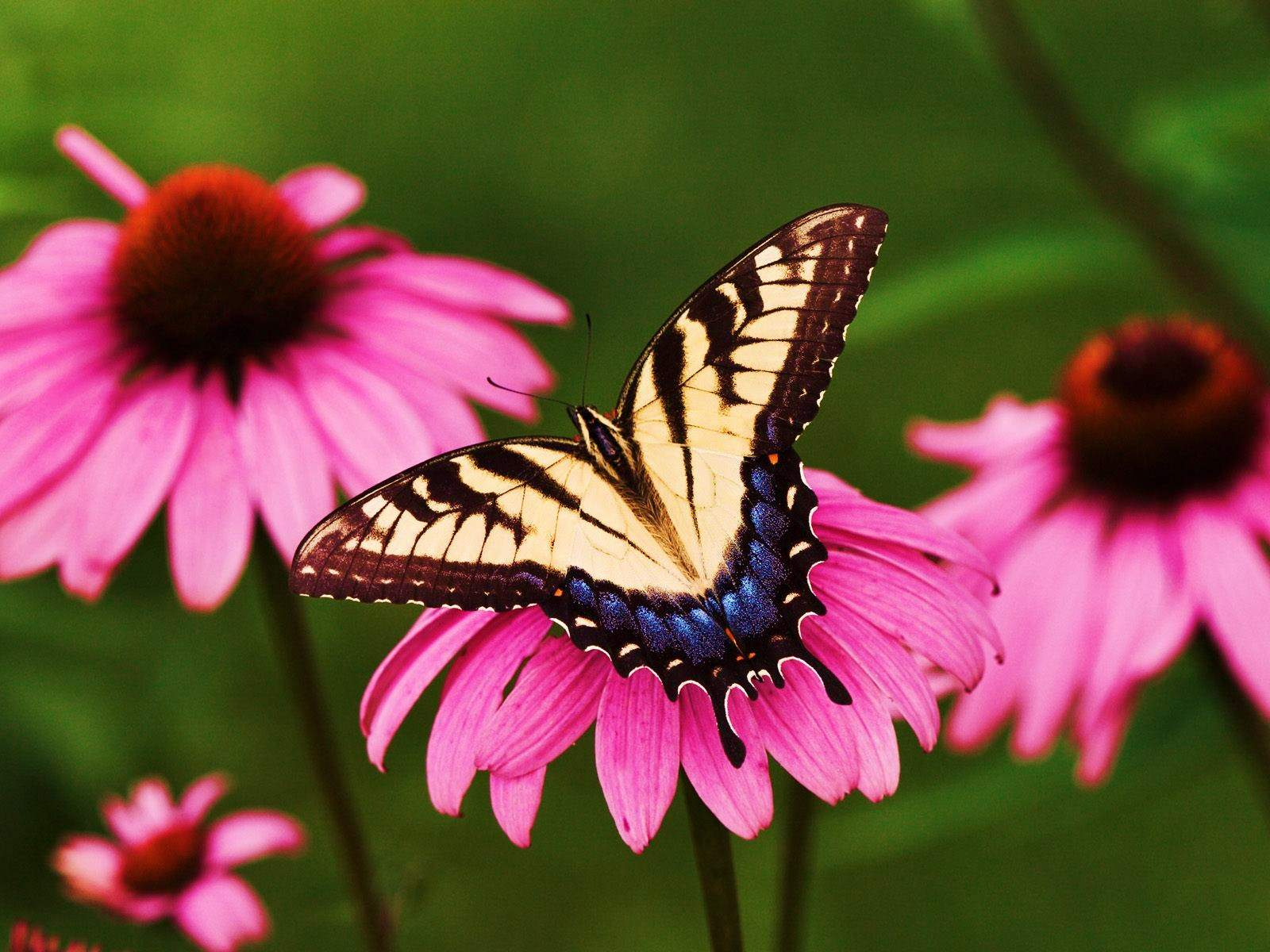 20 beautiful pictures of butterflies