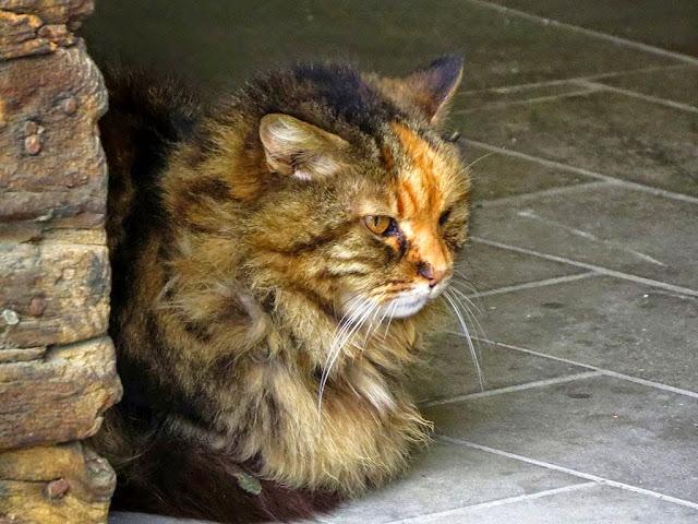 Cat, Scali delle Pietre, Livorno