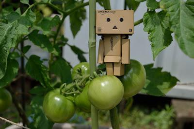 ダンボー 青いトマト 1