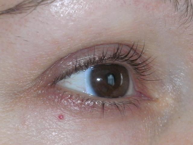 Pleasureflush Where Did My Eyelashes Go Rapidlash