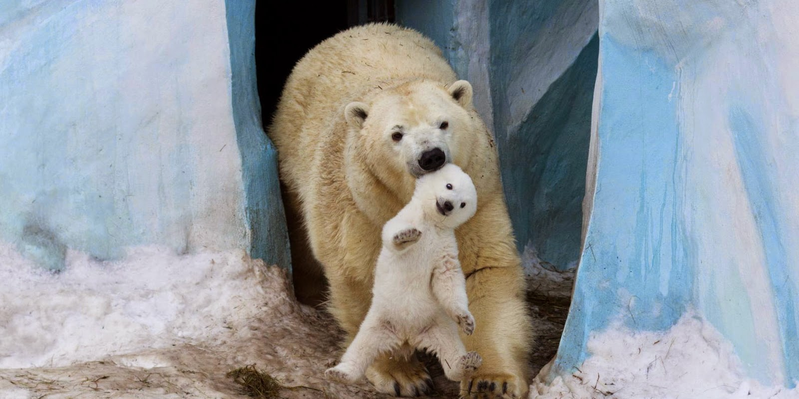 Of The Cutest Parenting Moments In The Animal Kingdom - 22 adorable parenting moments in the animal kingdom