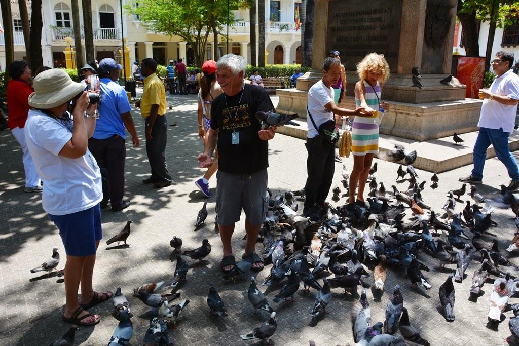 Cartagena des Indes pigeons