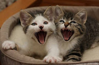 Gatinhos engraçados parecem estar sorrindo