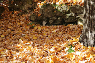 A thick carpet of leaves from the Tea Tree (Linden)