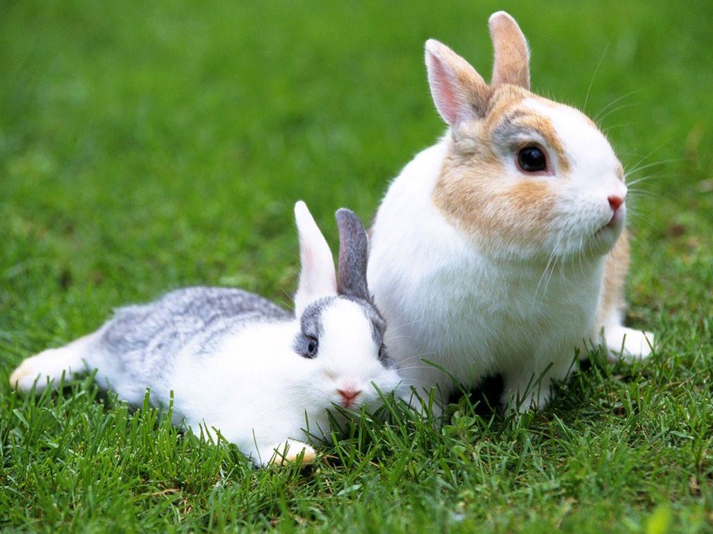 rabbit cam