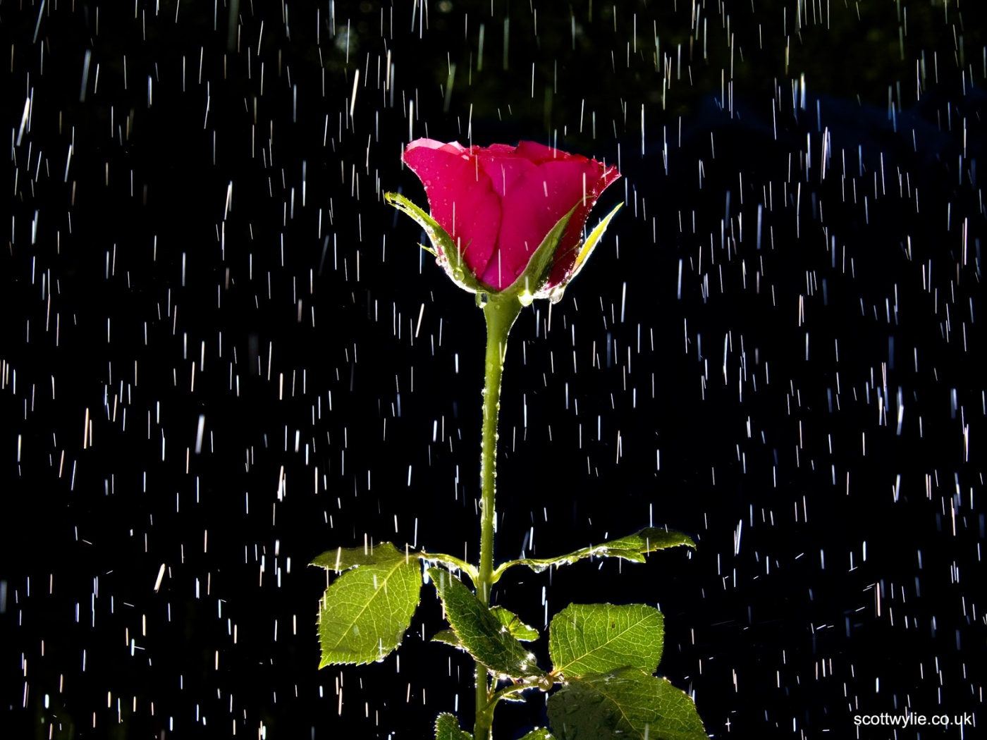 HD Snapshots: rain wallpapers love wallpapers alone ...