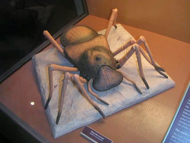 Spider Megarachne sarboniferous Period. by Plioart on DeviantArt
