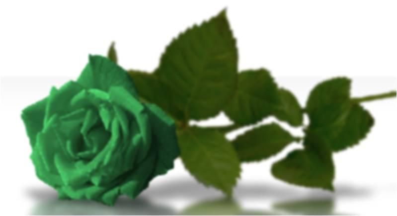 RECUERDOS DE LA ABUELA E HIJO: Significado de las rosas