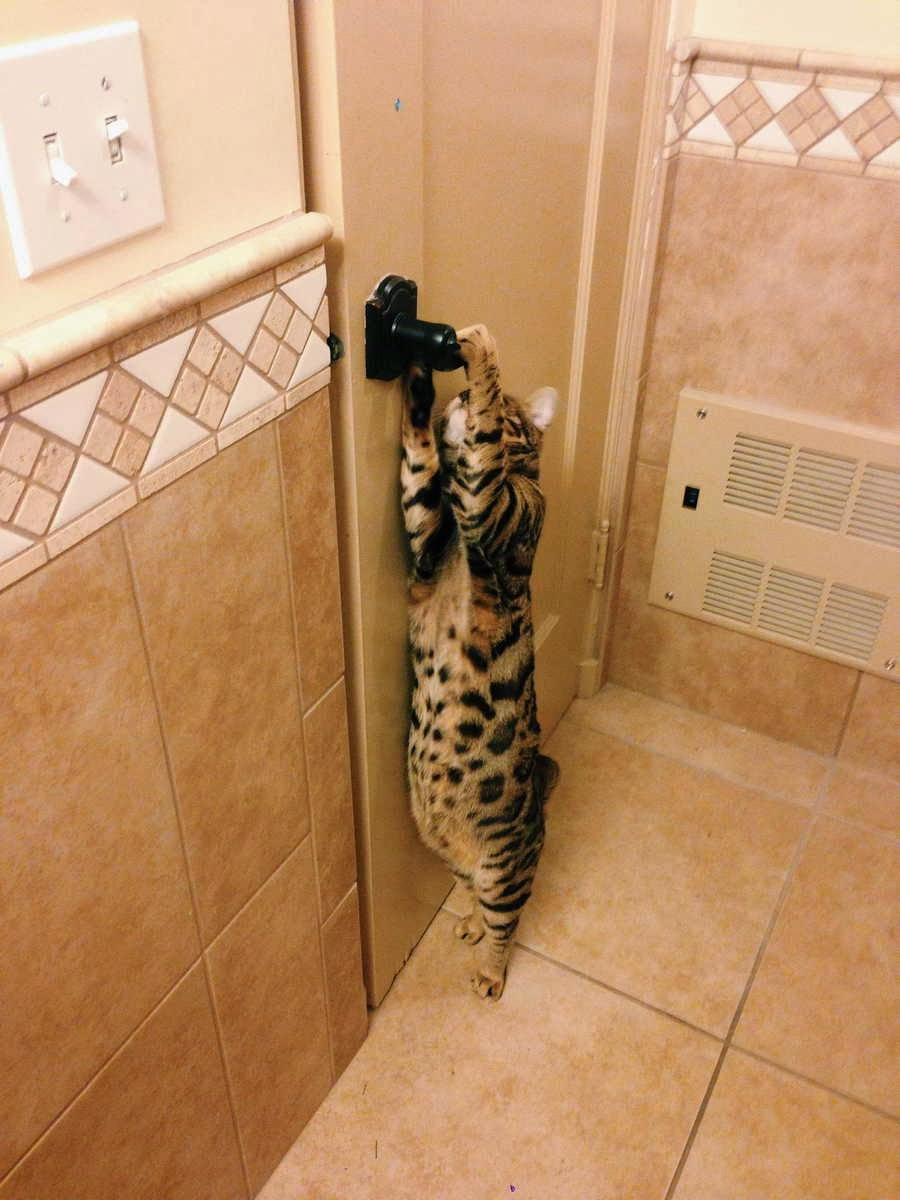 Funny cats - part 82 (40 pics + 10 gifs), cat photo, cat tries to open the door