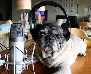 Dog with headphones on, podcasting