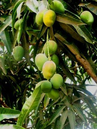 HELP YOURSELF TO HEALTH: Lose Weight With Wild African Mango