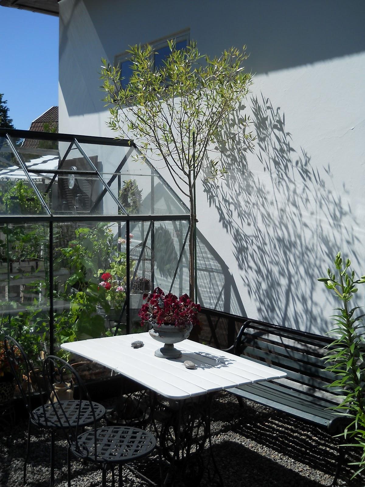 Tittis trädgård: mars 2012