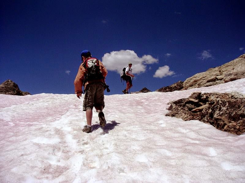 Watermelon snow, also called snow algae, red snow, or blood snow, is Chlamydomonas nivalis.