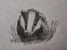 NOT GUILTY - STOP THE BADGER CULL