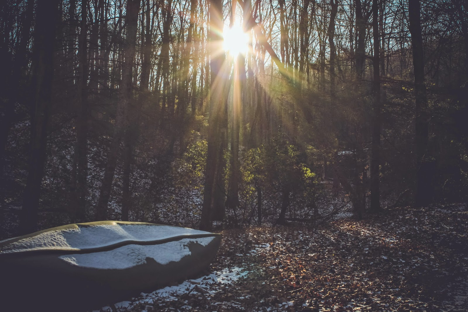 are we out of the woods yet snow georgia outdoors winter photography trees leaves canoe sunlight sun