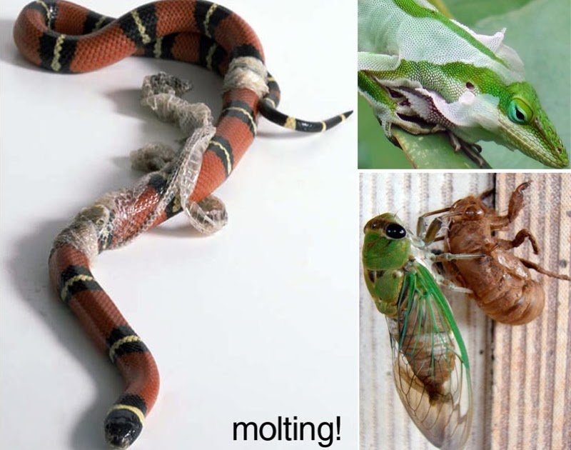 E Is For Explore Molting Experiment