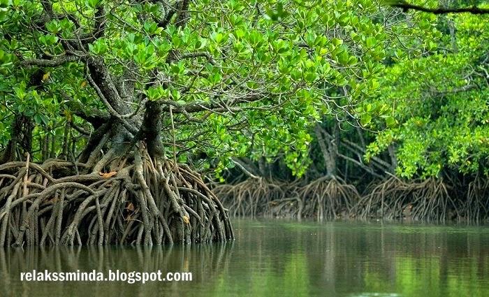 Jenis-Jenis Hutan Di Malaysia - Hutan Paya Laut