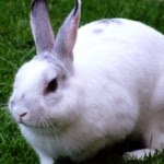 6 Tips to Keep Rabbits Keeping Fit with Physical Exercise