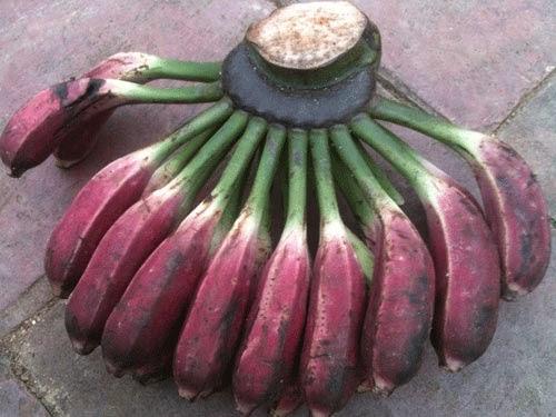 Công dụng hỗ trợ trị bệnh của cây chuối hột rừng