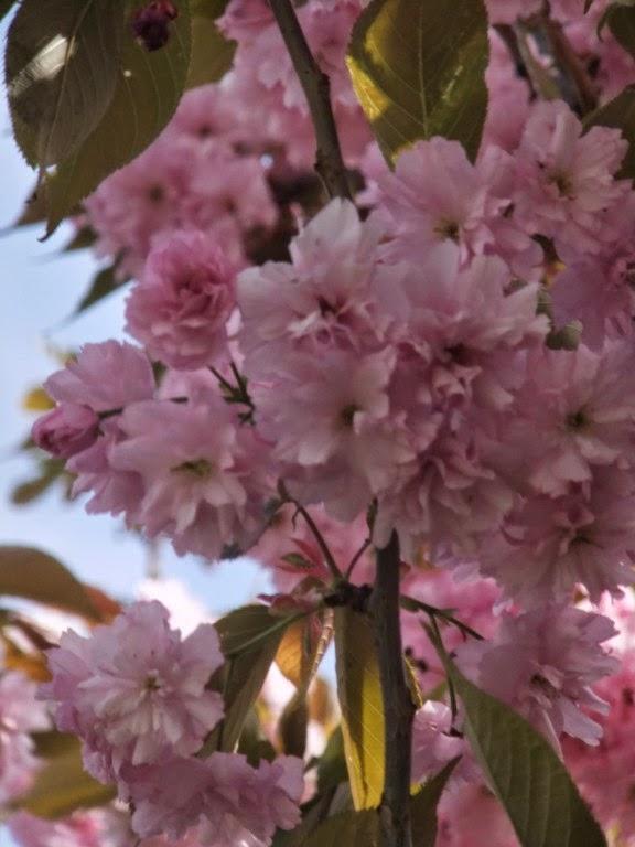 Blühbäume