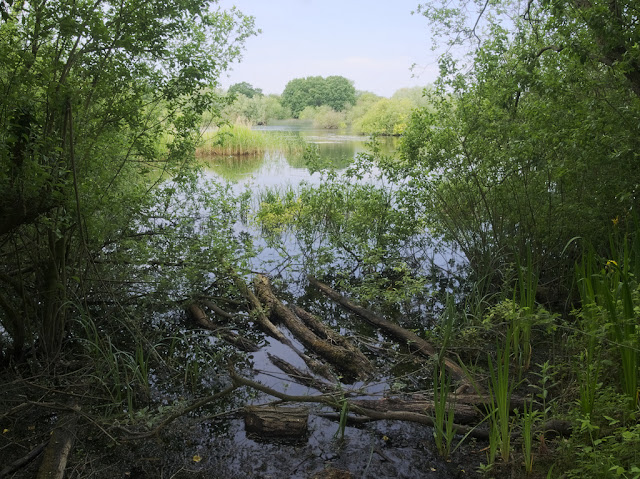 Looking across Dickerson's Pit from an inlet filled with floating logs