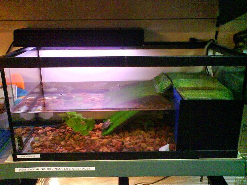 Animal click tortugas de agua for Acuario tortugas
