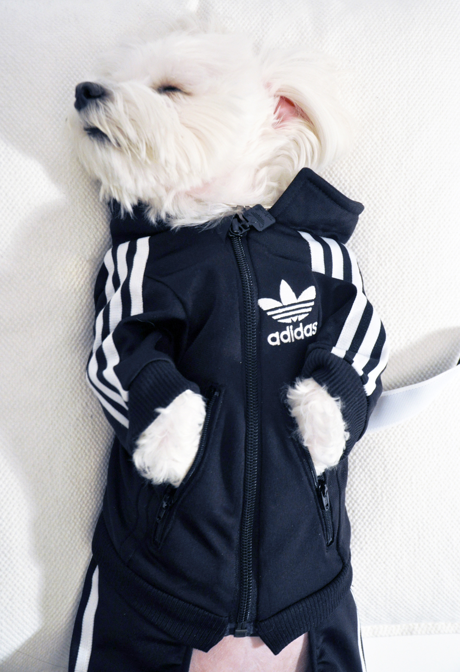 Pets_OFFmag: Luxirare Custom Doggy Adidas Tracksuit
