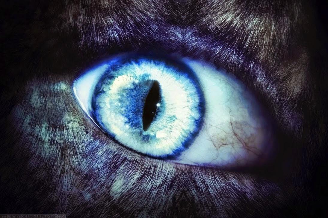 werewolf, cryptozoology, alpha, werewolf paranormal romance, shapeshifter romance, werewolf origins, skinwalkers