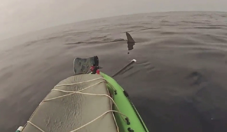 Hammerhead shark nears kayak sailboat off Solano Beach San Diego CA