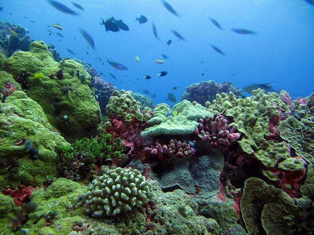 Mengenal Lebih Jauh Jenis-Jenis Terumbu Karang Indonesia yang Cantik dan Menawan
