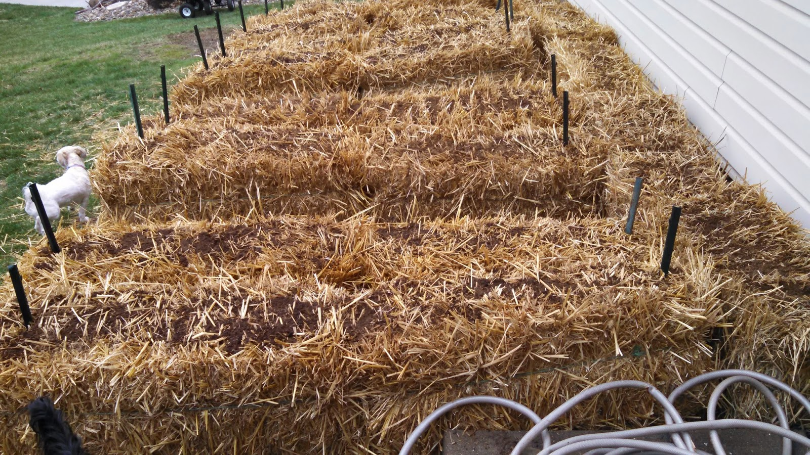 Conditioning Bales for Straw Bale Gardening