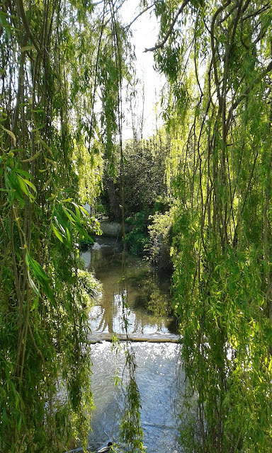 Willows and Water by Sarah Turpin