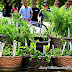 Herb Heaven, Colonial Williamsburg, Virginia