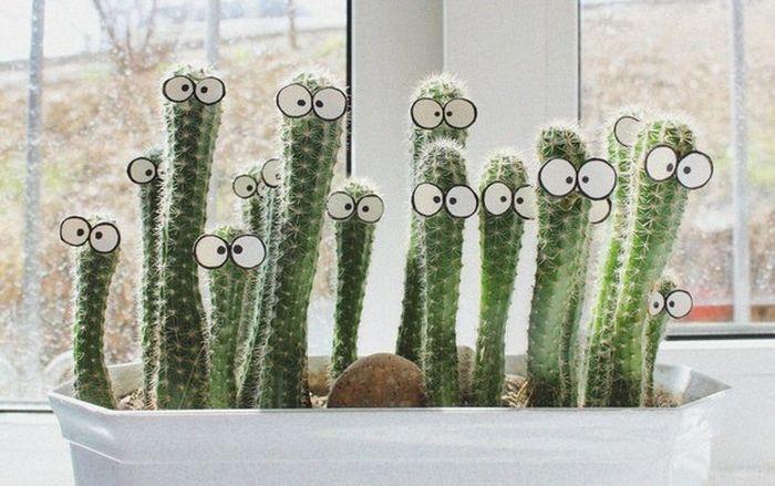 Mil ideas para la casa y el jardin cactus con ojos for El jardin en casa