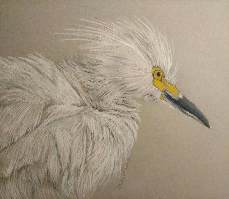 Egret iln Ruffle