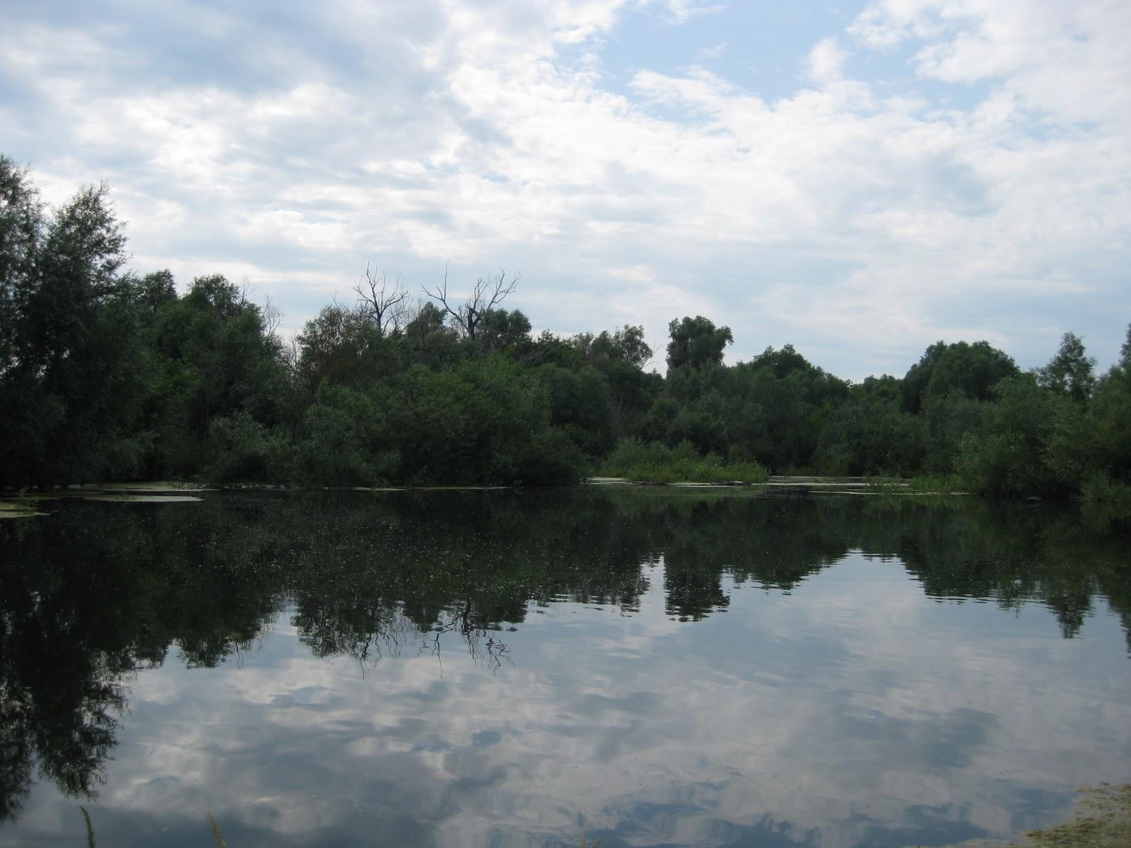 Прогулка на пруд который берет свой