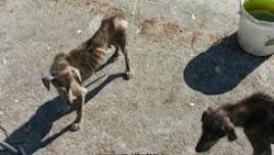 legalizzato sterminio cani in Romania