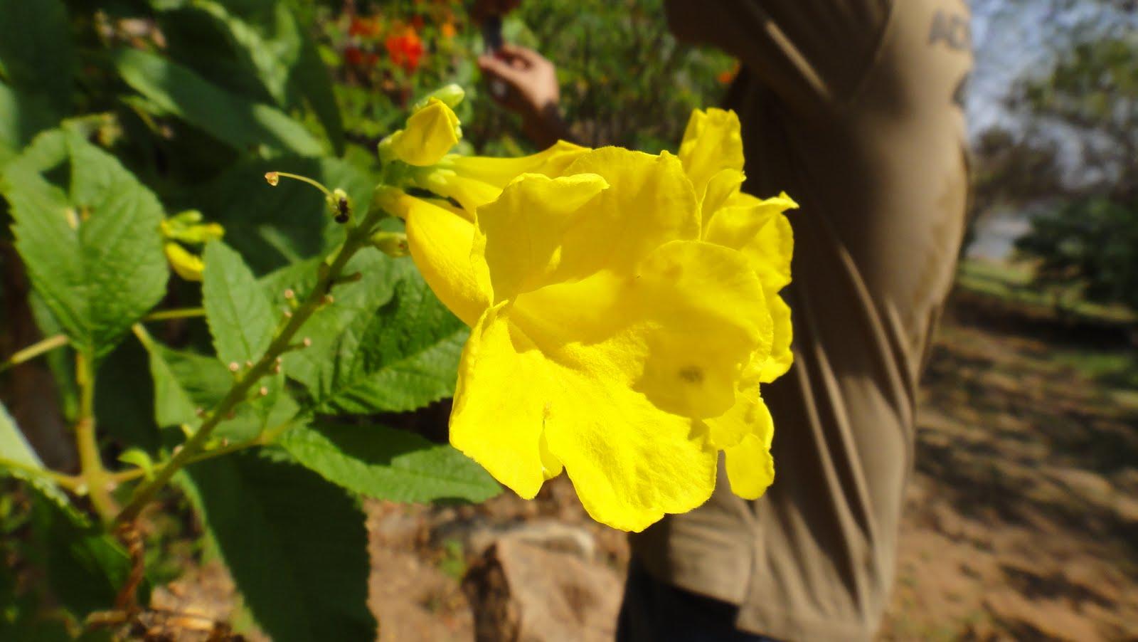 http://1.bp.blogspot.com/-Ac4wPWQ0b78/TaGhovCfeDI/AAAAAAAADcQ/Oya_P2DkdYs/s1600/Flowers%2BHD%2BWallpapers.JPG
