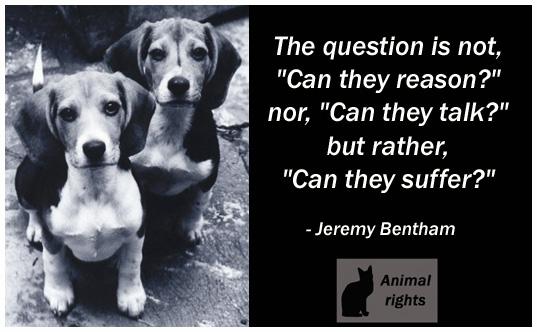 Boing Animal Welfare  A Fresh New Start