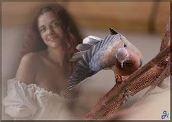 Os Pássaros!