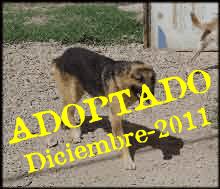 Zorro Adoptado
