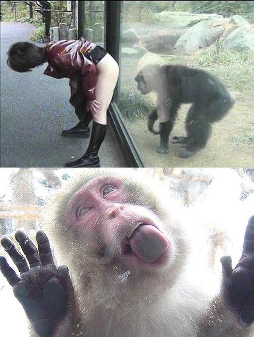 18sx - Monyet Yang Gila Sex