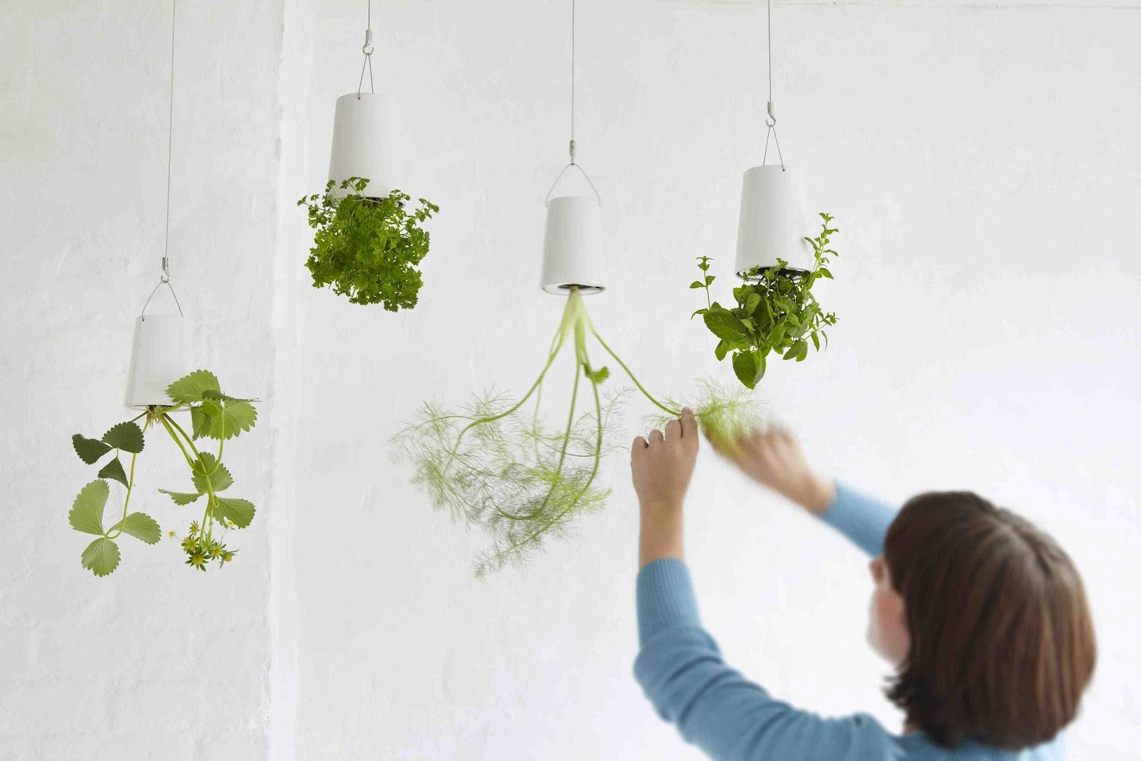 Flores y plantas en el hogar