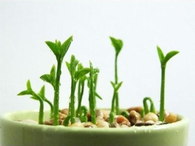 El huerto en macetas como plantar un limonero - Como cultivar un huerto ...