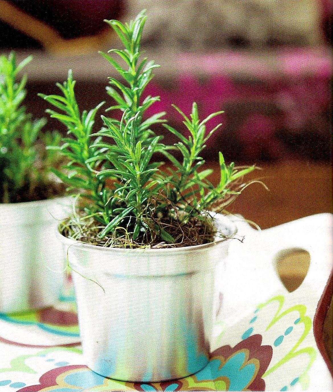 Talita Monteiro: Feng Shui: Plantas Poderosas #679D2E 1169 1375