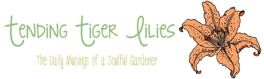 Tending Tiger Lilies