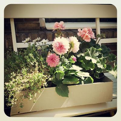 ByHaafner, pink dahlia's, white bench, container garden, urban garden